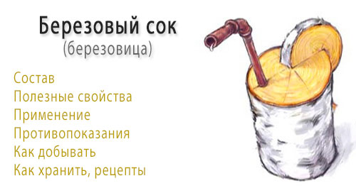 Берёзовый сок - польза, вред, добыча и хранение березового сока