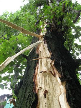 Следы поражения дерева молнией