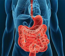 Болезни желудочно-кишечного тракта (ЖКТ)
