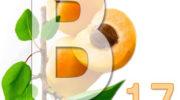 Витамин В17 (амигдалин). Описание, применение, польза, в каких продуктах содержится B17