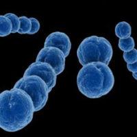 Пневмококк— симптомы, причины, виды, анализы и лечение пневмококковой инфекции