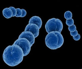 Пневмококк - симптомы, причины, виды, анализы и лечение пневмококковой инфекции