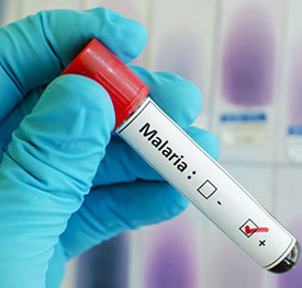 Патогенез малярии