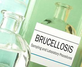 Лечение бруцеллеза