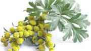 Полынь – лечебные свойства, состав, рецепты и лечение полынью