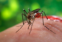Кого кусают комары чаще всего и как от них защитится?
