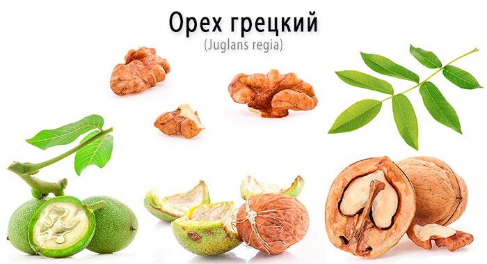 Грецкий орех - состав, полезные свойства, лечение